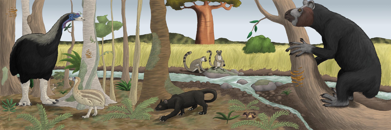 Resultado de imagem para madagascar megafauna